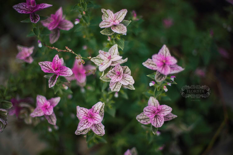 Цветы для вдохновения.