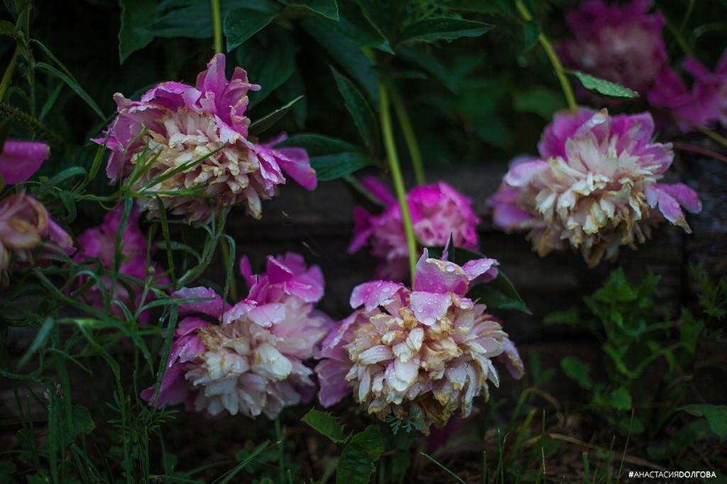 цветы Новокузнецк
